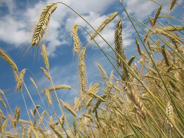 Agricoltura - Photo credit: Foto di R0bin da Pixabay