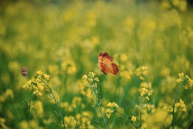 Biodiversità - Foto di Tarikul Raana da Pexels