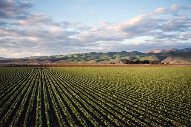 Agrivoltaico - Foto di Tim Mossholder da Pexels