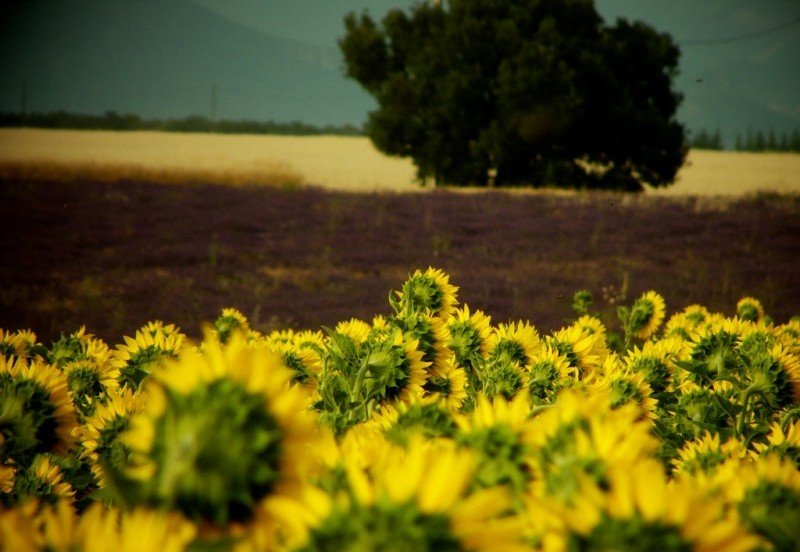 Agriculture - Photo credit: alpha du centaure / Foter / Creative Commons Attribution 2.0 Generic (CC BY 2.0)